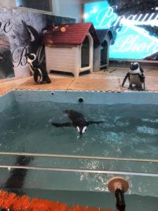 ペンギンのいるBAR会合in池袋